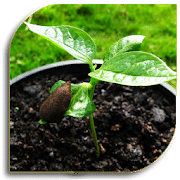 """Semillas """"width ="""" 180 """"height ="""" 180 """"srcset ="""" https://www.ubuntupit.com/wp-content/uploads/2020/01/Seeds.png 180w, https : //www.ubuntupit.com/wp-content/uploads/2020/01/Seeds-150x150.png 150w """"size ="""" (max-width: 180px) 100vw, 180px """"/> No es muy fácil difundir un plantar a partir de una semilla. Y todos lo sabemos. La forma correcta de plantar la semilla y cuidar la tierra y las plantas bebé es esencial aquí. Al mismo tiempo, debes saber qué tipo de semilla y tierra necesitas combinar para obtener un mejor resultado. Para toda esta confusión, puede usar una sola aplicación. Es Seeds. Es la última aplicación de la lista de hoy y es otra aplicación de jardinería popular para su dispositivo Android. El uso de esta aplicación puede ser muy una buena idea para usted si desea cultivar las plantas correctamente. </span> </p> <p><span style="""