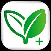 Remedios caseros +: Curas naturales